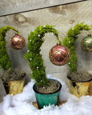 Grinch Tree Plant in Toronto, ON | THE NEW LEAF FLOWERS & GIFTS