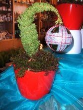 Grinch Tree Plant