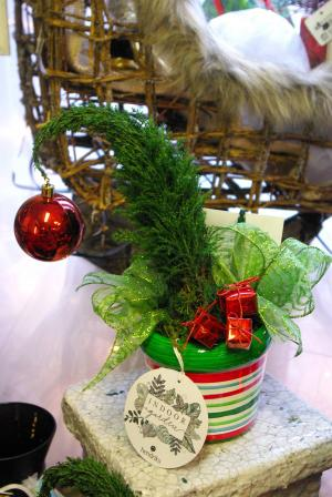 Grinchmas Trees Plant in Corner Brook, NL | The Orchid