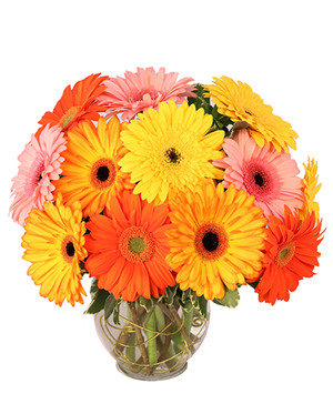 Groovy Gerberas Flower Arrangement in Oxnard, CA | Mom and Pop Flower Shop
