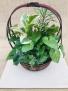 Growing Green Dish Garden