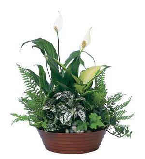 Growing Love Plants