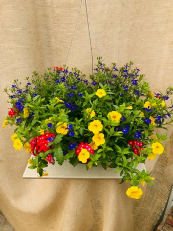 Grown Primarily Perfect Hanging Basket
