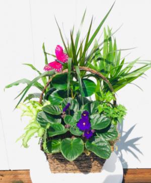 H  in Whittier, CA | Rosemantico Flowers