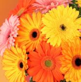 Hand tied cut Gerbra daisy bouquet  Subscription