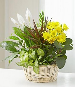 Handle Basket Dish Garden With Fresh Cut Flowers