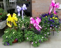 HANGIN' WITH YOU! HANGING BASKETS