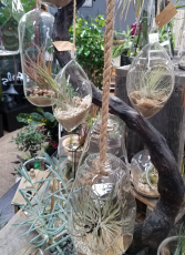 Hanging Air Plants Plants