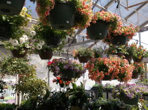 HANGING ANNUAL BASKETS  in Springfield, VT | WOODBURY FLORIST