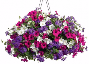 Hanging Basket #1 Assorted Sun & Shade Baskets to choose in Granville, NY | The Florist at Mandy's Spring