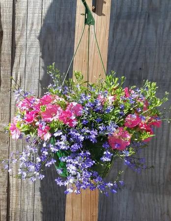 Hanging Basket 1 Outdoor