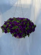 Hanging Basket 10