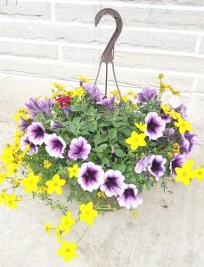 """Hanging Basket 10"""" mixed flowering basket"""