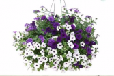 Hanging Basket #2