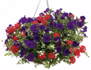 Hanging Basket #3  in Granville, NY | The Florist at Mandy's Spring