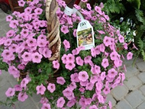 Hanging Basket  in Bryan, OH | Farrell's Lawn & Garden and Flowers