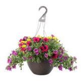 Hanging Basket Colors and Combos vary
