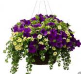 Beautiful Hanging Basket Hanging Basket