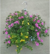 Large Hanging Basket Plant