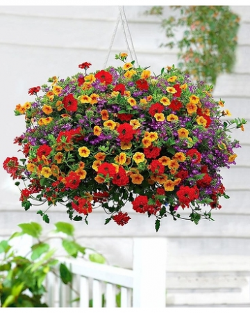 Hanging Basket SALE!!! Two Sizes.Med, Large, Flowers and Colors May Vary
