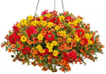 Hanging Basket - Orange/Red/Yellow