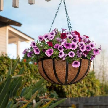 Hanging Basket  Outdoor