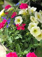 Hanging Basket Outdoor blooming plants