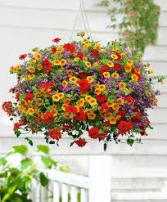 Hanging Basket Outdoor Plants