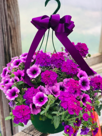 Hanging Basket- Sun  color and flower type vary