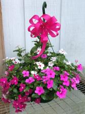 Hanging Basket- Vinca Greenhouse