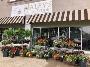 Hanging Basket/Patio Pots outdoor basket in Coshocton, OH | Haley's Floral Studio