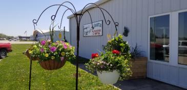 Hanging baskets Live plants in varying hanging baskets