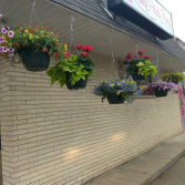Hanging Baskets Local Delivery Only