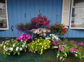 Hanging Baskets Mother's Day