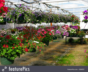 Hanging Flower Basket Fresh Basket  in Roanoke, VA | Flowers By Eddie
