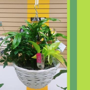 Hanging Indoor  Tropical Planter