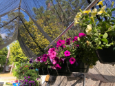 Hanging Outdoor Baskets