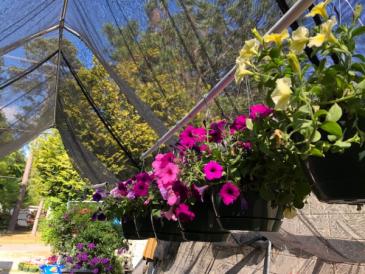 Hanging Outdoor Baskets