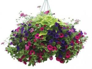 Hanging Patio Gardens Plants in Canon City, CO | TOUCH OF LOVE FLORIST AND WEDDINGS