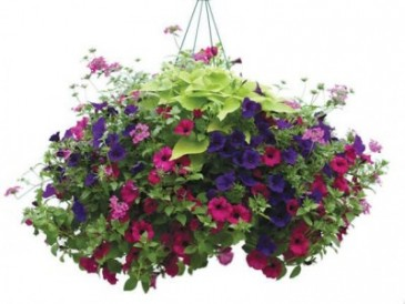 Hanging Patio Gardens Plants