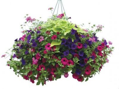 Hanging Patio Gardens Plants