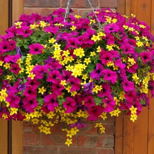 Hanging Potted Plant