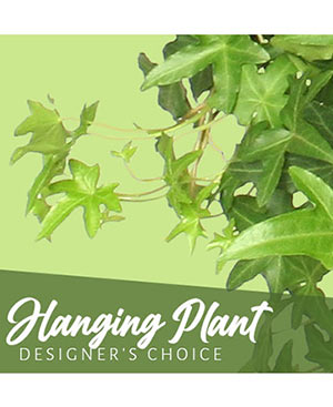 Hanging Plant Designer's Choice in Osceola, WI | WILDWOOD FLOWERS & ALL THINGS GREEN & GROWING