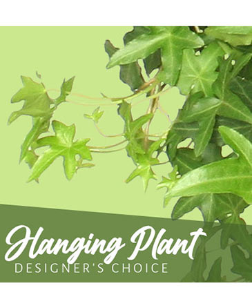 Hanging Plant Designer's Choice