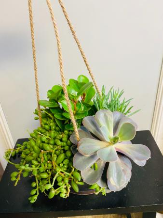 Hanging  succulent garden PLANT