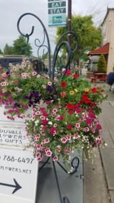 Hanging sun basket outdoor flowers
