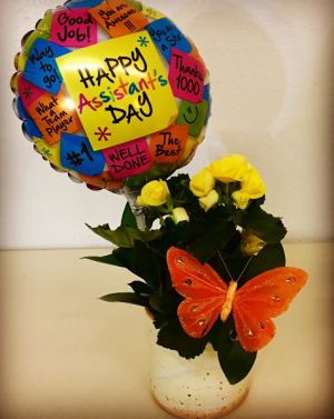 """Happy Assistant's Day Blooming Plant 4"""" Blooming Plant with Themed Balloon in Plainview, TX 