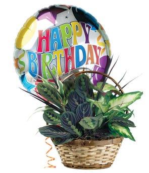 Happy Birthday Dish Garden
