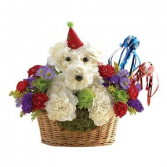 HAPPY BIRTHDAY DOG-ABLE DELIVERY