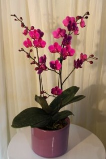 HAPPY BIRTHDAY!!! Orchid Plant